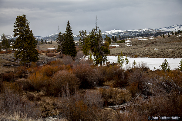Spring in Yellowstone taken Spring 2019 in Yellowstone © Copyright All Rights Reserved John William Uhler
