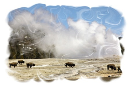 Old Faithful Eruption and Buffalo by John William Uhler Copyright © All Rights Reserved