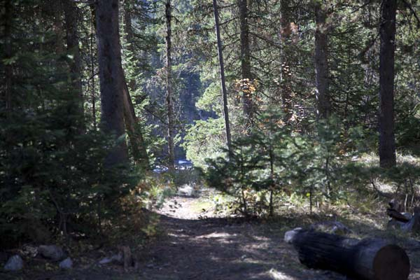 Cave Falls Campground by John William Uhler © Copyright