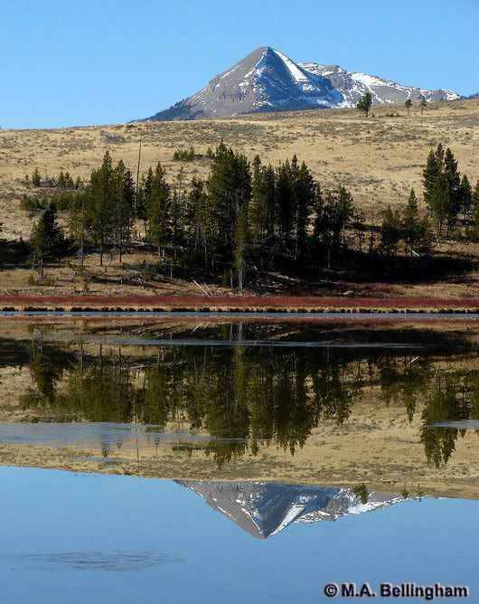 Swan Lake - Yellowstone National Park ~ Photo by M.A. Bellingham © Copyright All Rights Reserved
