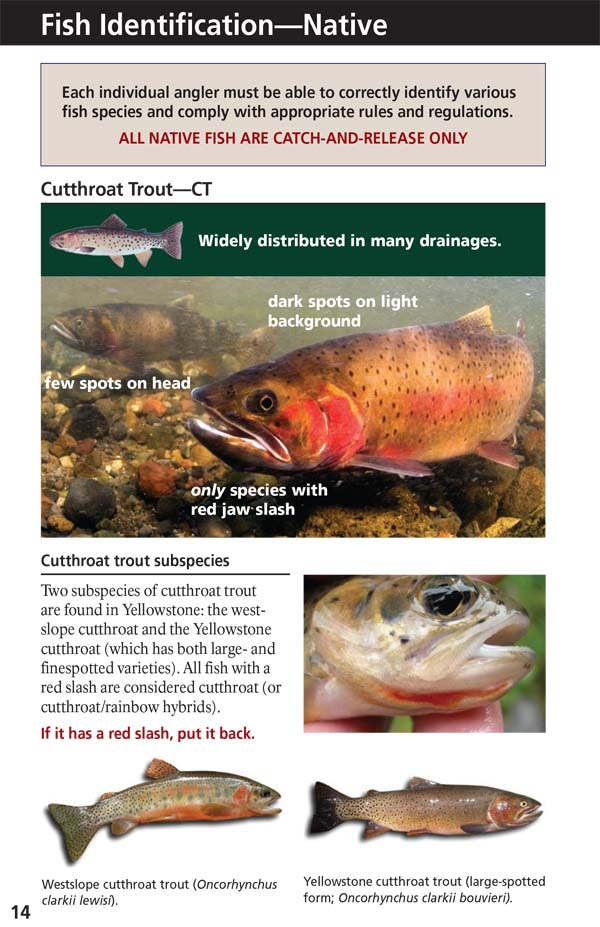 Yellowstone Fishing Regulations Page 16 - NPS Image