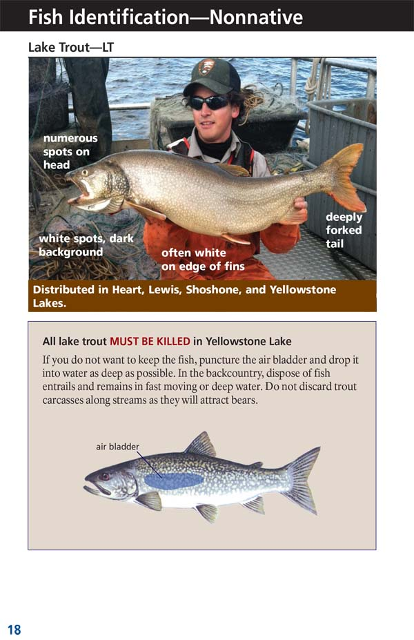 Yellowstone Fishing Regulations Page 20 - NPS Image