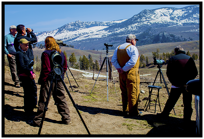 Wildlife Watchers Spring 2014 ~ © Copyright John William Uhler All Rights Reserved